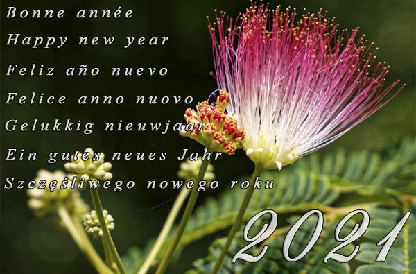 [image : Tous mes vœux pour 2021]